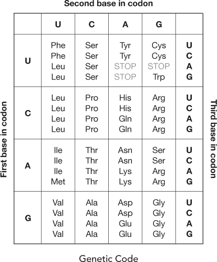 Table shows the genetic code