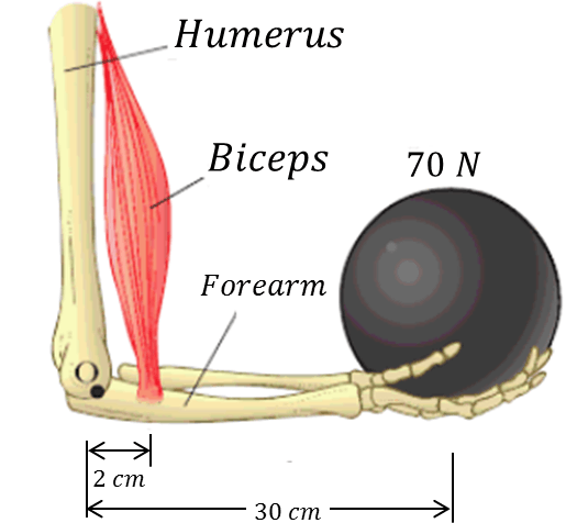 Diagram of hand, which lifts a ball