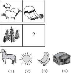 Solve This Abstract Reasoning Analogy on Pine Tree