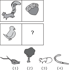 Solve This Abstract Reasoning Analogy on Little Bird