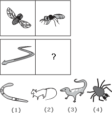 Solve This Abstract Reasoning Analogy on Snake