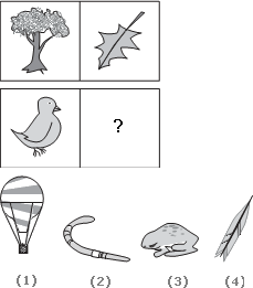 Solve This Abstract Reasoning Analogy on Bird