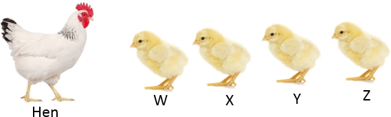 This diagram show hen with chickens