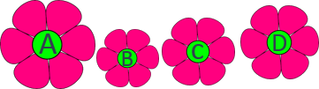 This image shown the different sizes of flowers