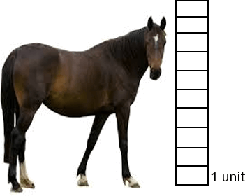 This diagram show height of horse