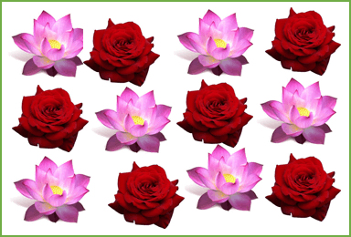 This image shows that some roses and lotus