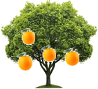 This figure shows orange tree – Choice B