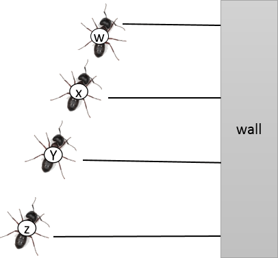 This diagram show ant to the wall