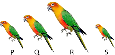 This diagram show number of parrots in line