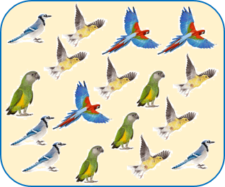 This poster shows different type of birds