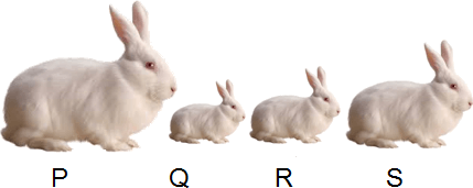 This diagram show number of rabbits in line