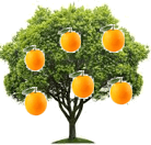 This figure shows orange tree – Choice D