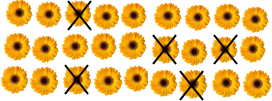 This picture shows number of sunflowers