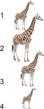 This diagram show number of giraffe