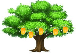 This is mango tree – Choice A