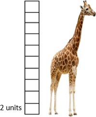 This diagram show giraffe