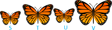 This figure shows the number of butterflies