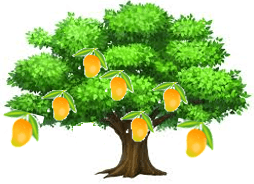 This is mango tree – Choice C