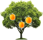 This figure shows orange tree – Choice A