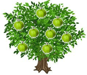This is guava tree – Choice D