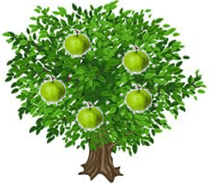 This is guava tree – Choice B