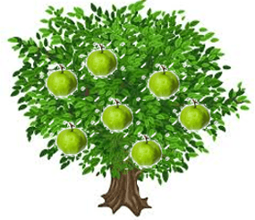 This is guava tree – Choice C
