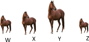This diagram show number of horses