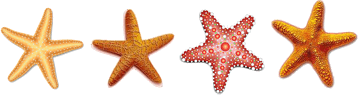 This image shows the four starfish