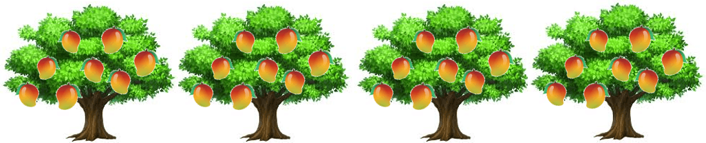 This image shows the 4 mango trees