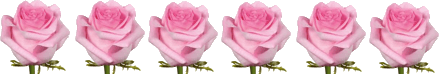 This image shows the 6 flowers of roses