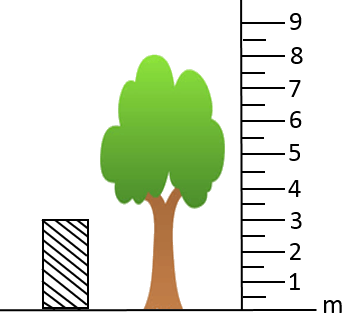 This figure shows the height of tree and wooden block