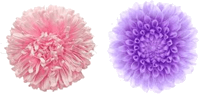 This figure shows the pair of two flowers – Choice A