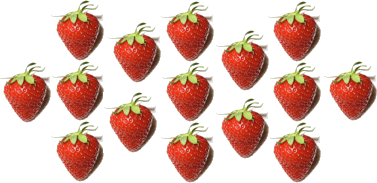 This image shows the many strawberries