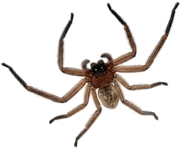 This image shows the spider