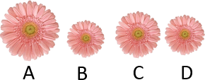 This image shows the four flowers