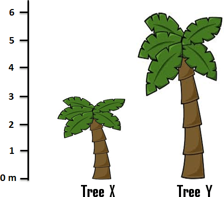 Tree X and tree Y are given in image