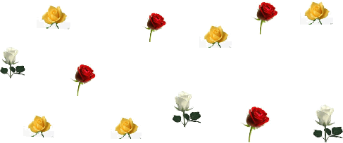 Image of different colored roses