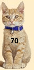Image of cat with number 70