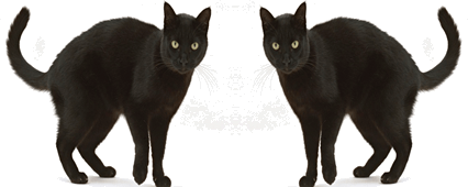 Two similar opposite image of a cat