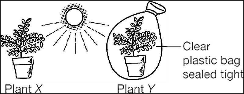 Image shows The Plants n Flowers