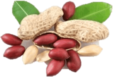 This image shows the fruits the edible seeds – Choice D