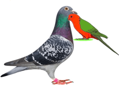 This image show the birds behaviour – Choice A