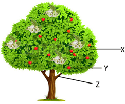 This image show the tree with fruits and flowers
