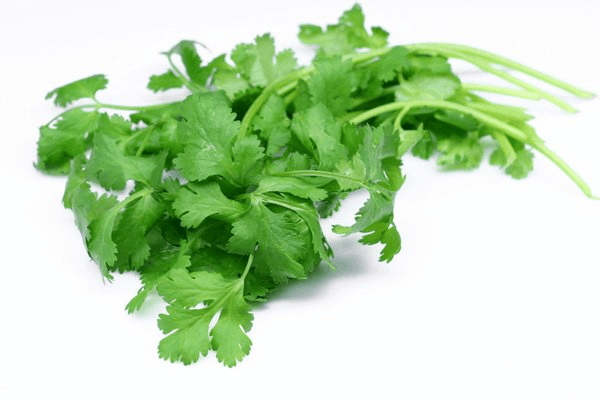 This picture shows coriander.