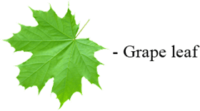 This image show the different leaves – Choice A