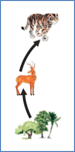 Image of shown food chain