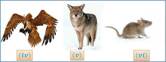 Image of different trophic level of the food chain (iv)