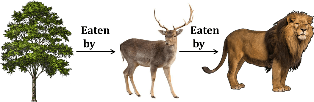 Diagram shows the food chain of lion