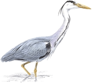 Image shows different types of claws of bird – Choice A