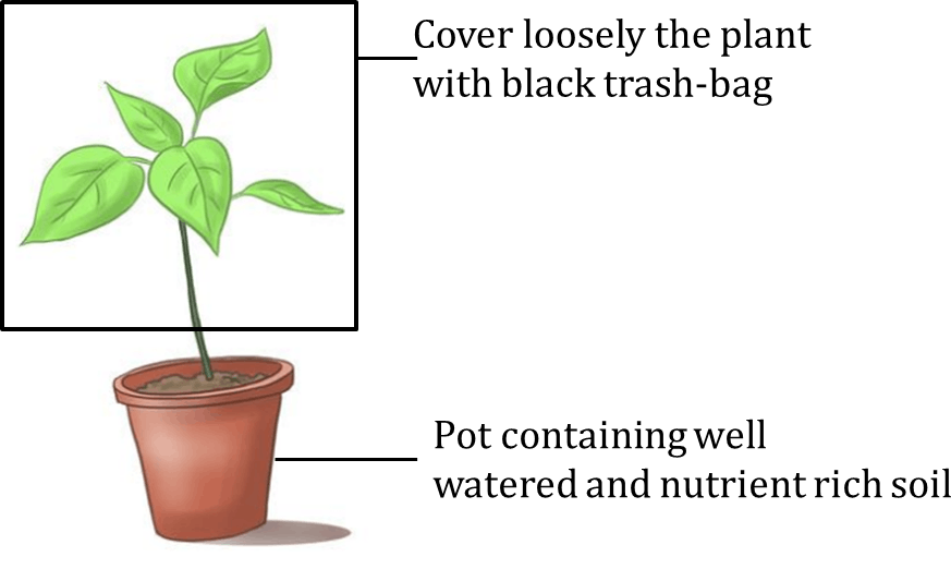 Figure shows the plant cover with black trash-bag